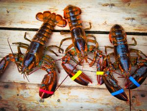 Live-Lobster-iStock-159243257-web