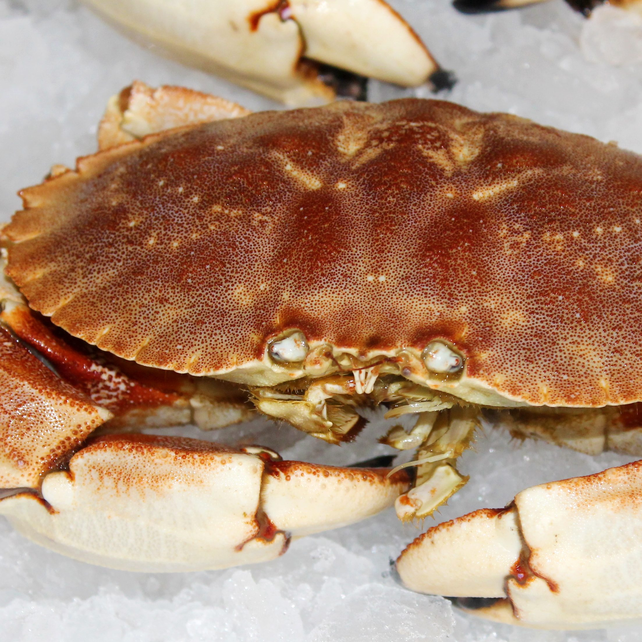 Sweet and Spicy Beer Steamed Rock Crab