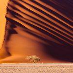 Dune 45, a massive red sand dune in the Namib Desert, Sossusvlei, Namibia