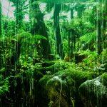 Adventuring and Jungle Rains