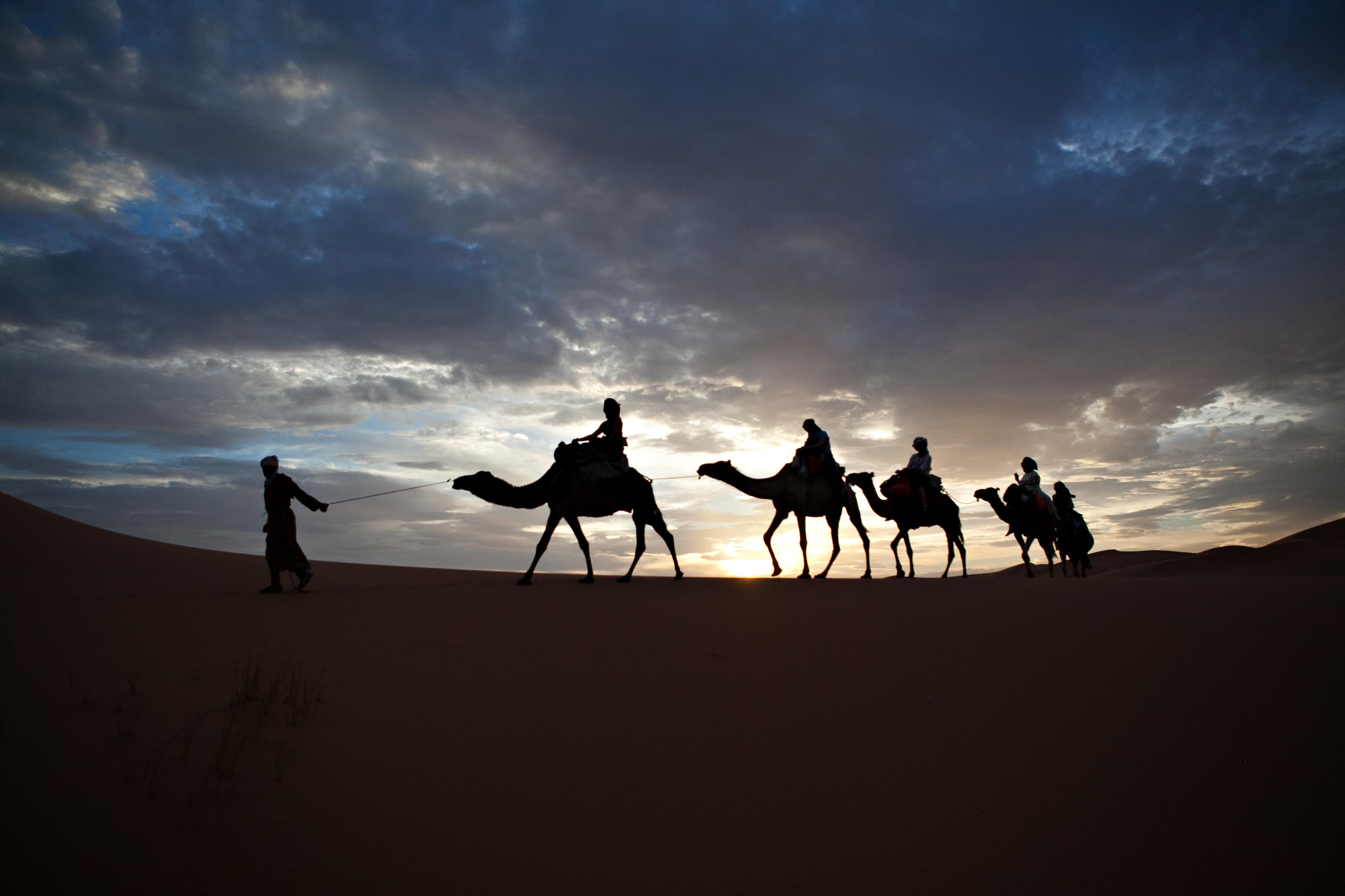 Camel Train in Desert