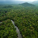 Amazon Rain Forest, Guyana