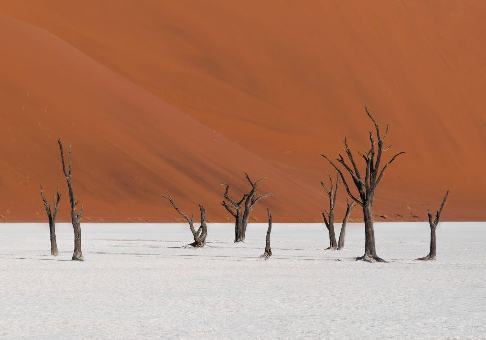 Namibia - Dead Vlei and the ancient camelthorn trees