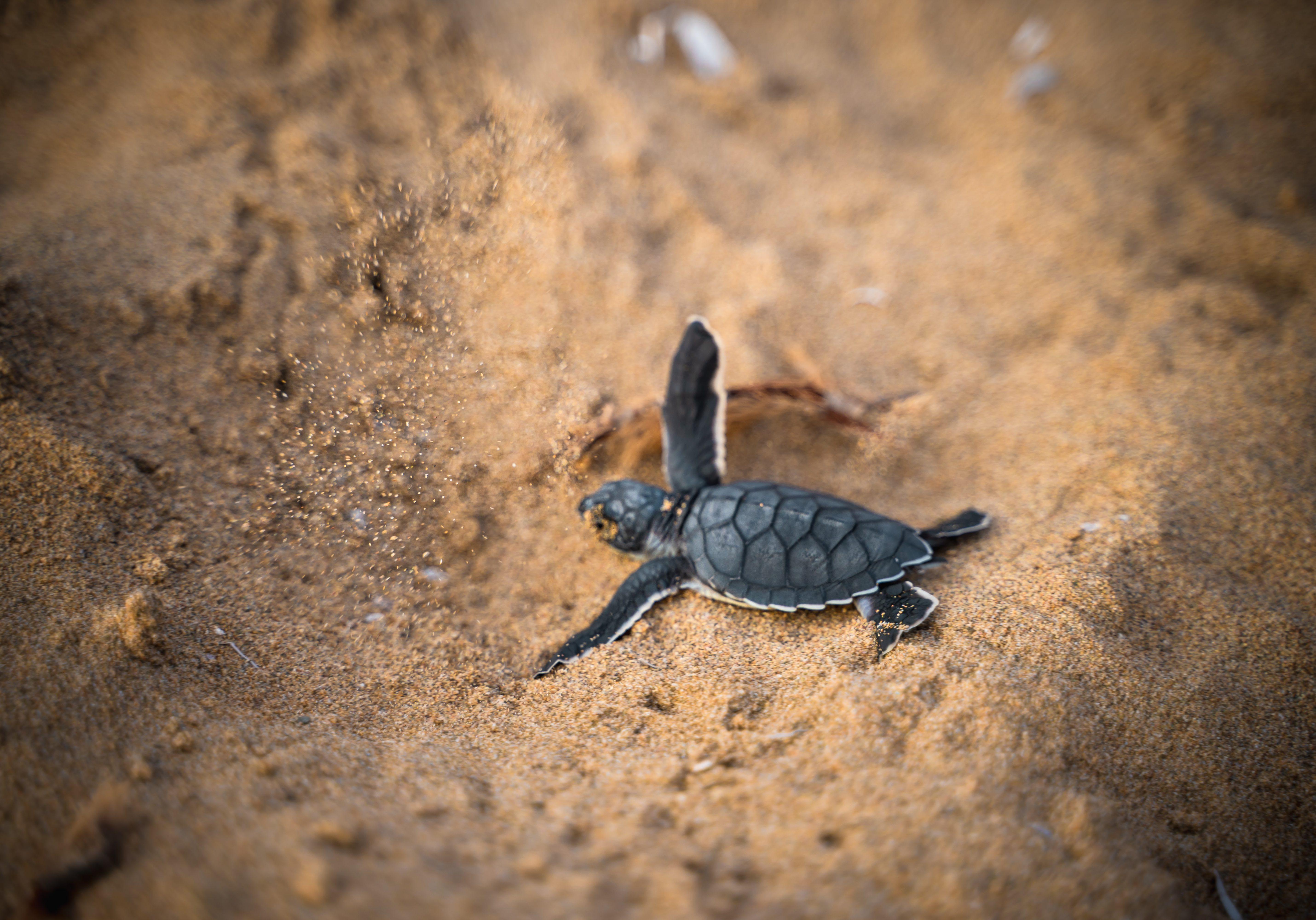 Turtles Cyprus 1