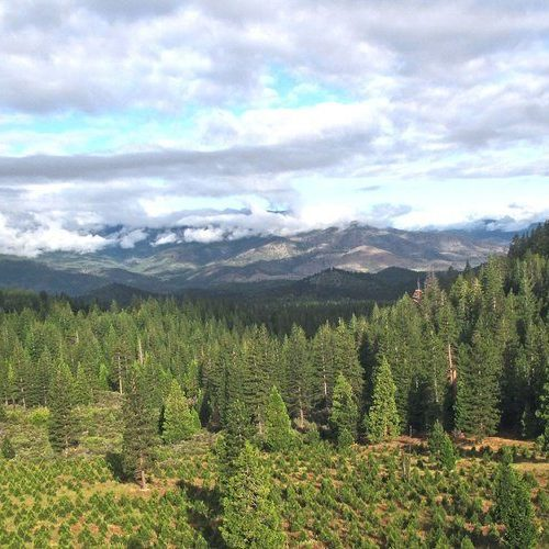 Reforestation_Southern_Oregon_2_24574203-aa42-4d72-911c-e21291fa18e2_1024x1024