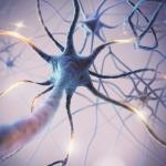 Neuron Enhancement